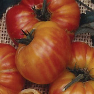 Old German Tomato Seeds