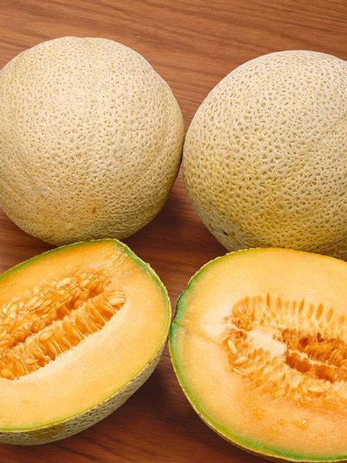 Honey Rock Melon Seeds