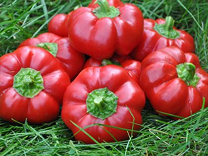 Pimento L Sweet Pepper Seeds