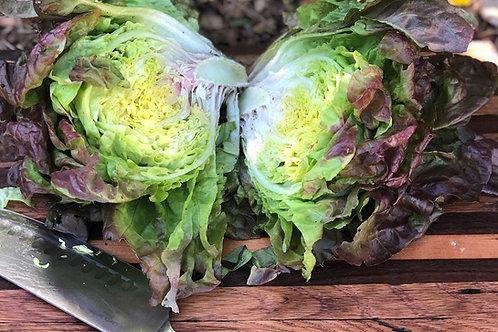 Marvel of 4 Seasons Lettuce Seeds