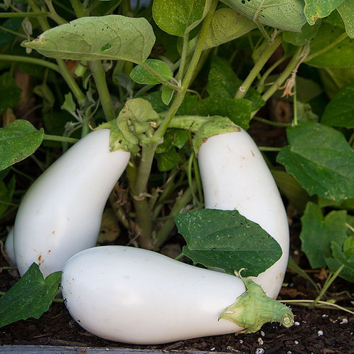 Casper Eggplant Seeds