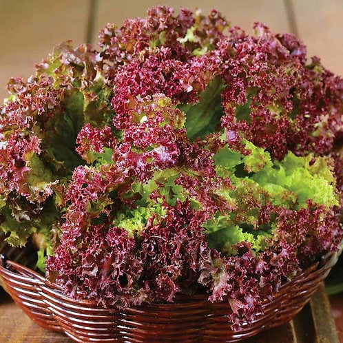 Selway Red Lettuce Seeds