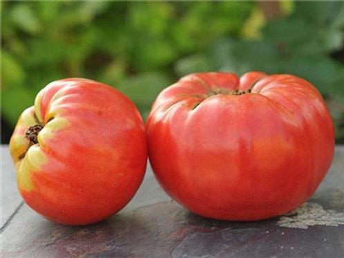 Abe Lincoln Tomato Seeds