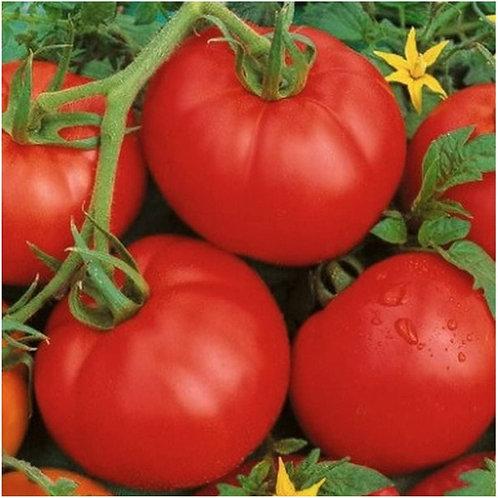 Ace 55 Tomato Seeds