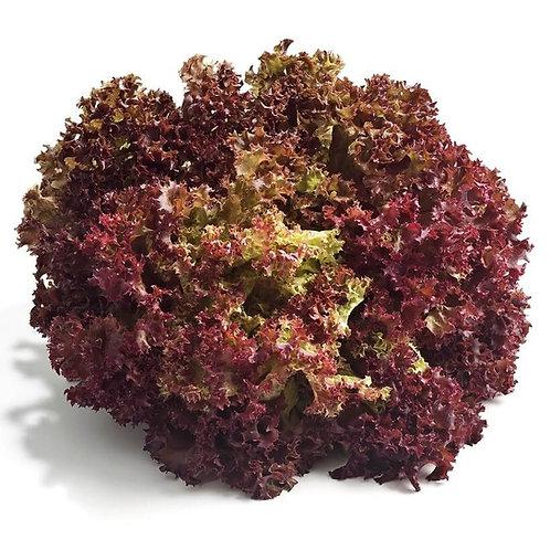 Dark Lolla Rosso Lettuce Seeds