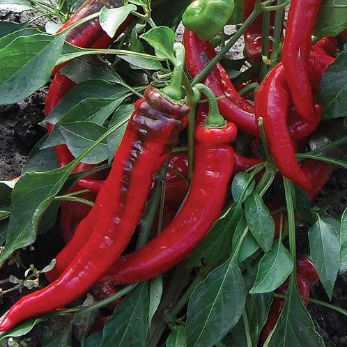 Jimmy Nardello Pepper Seeds