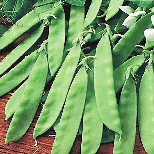 Oregon Giant Pea Snow Seeds