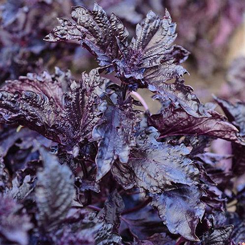 Purple Ruffles Basil Seeds
