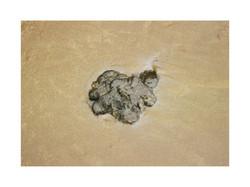 mancha de chapapote 15