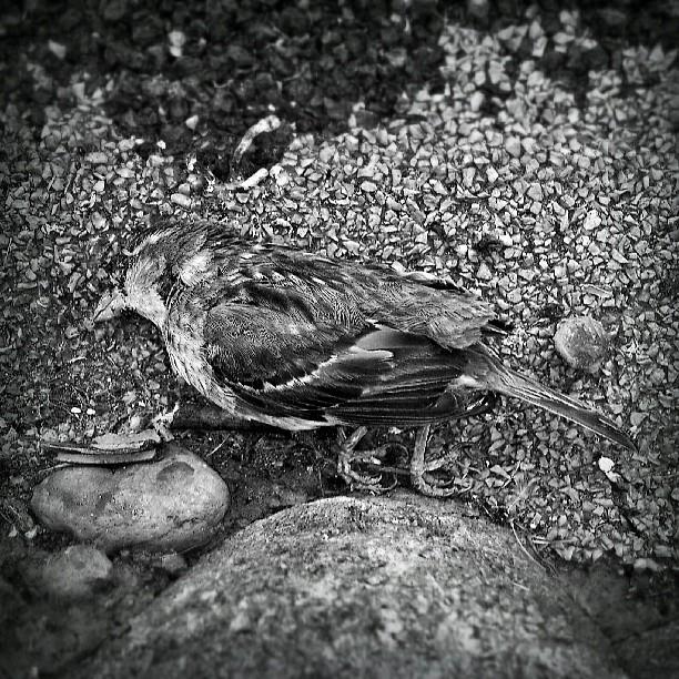 Foto_pájaro_muerto__(elegía_a_la_muerte_de_mi_padre)
