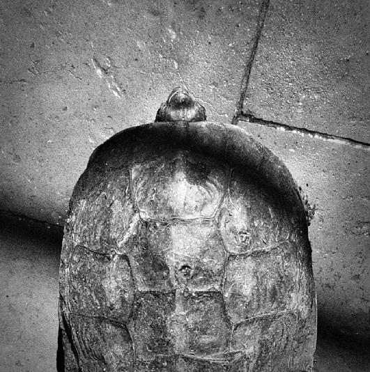 La tortuga y Aquiles.