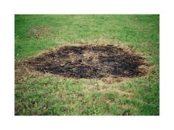 hierba quemada 15