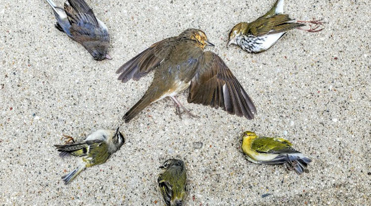 Birds laying on sand