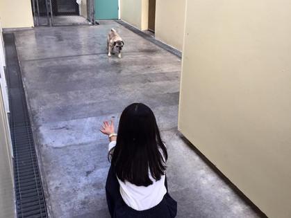 移住への道 Part4:海外引越し 犬一匹で〇〇円!?