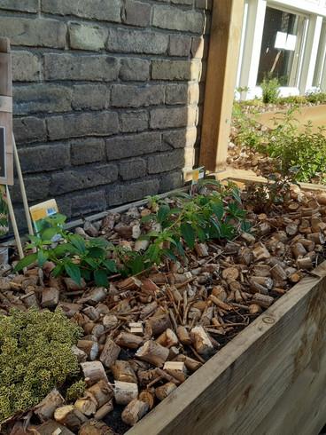 Balcony & Terrace Educative Garden Creation