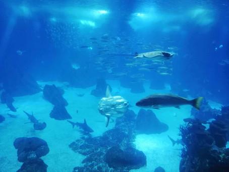 Lisbon Oceanarium: best reasons to visit it