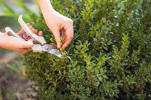 care-garden_121028-81.jpg
