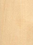 paper-birch.jpg