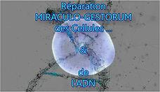Miraculo Gestorum.jpg