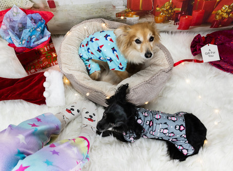 Pawliday Gift Guide '19