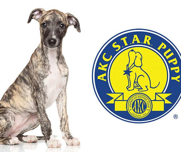 AKC-Star-Puppy.jpg