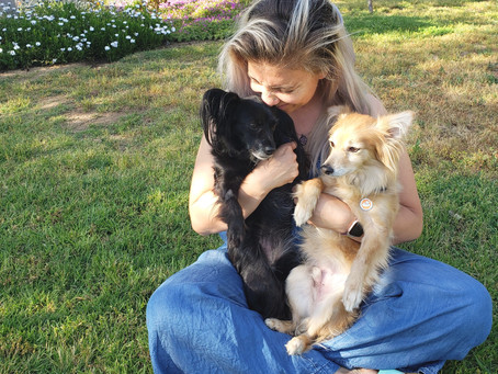"""Changing the Stigma About """"Rescue Dogs"""""""