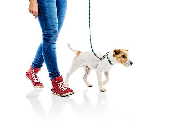 loose+leash+walking+puppy+training+denve