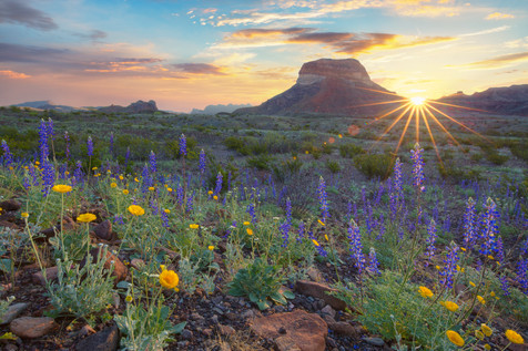 Big Bend - Bluebonnet Sunrise