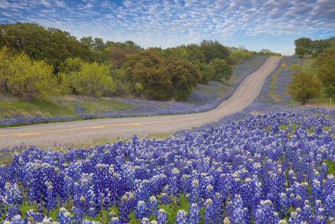 Bluebonnet Highway 2