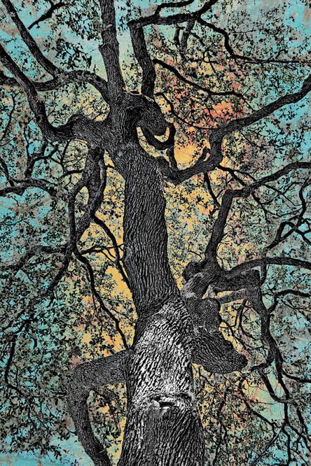 Zilker Tree Study