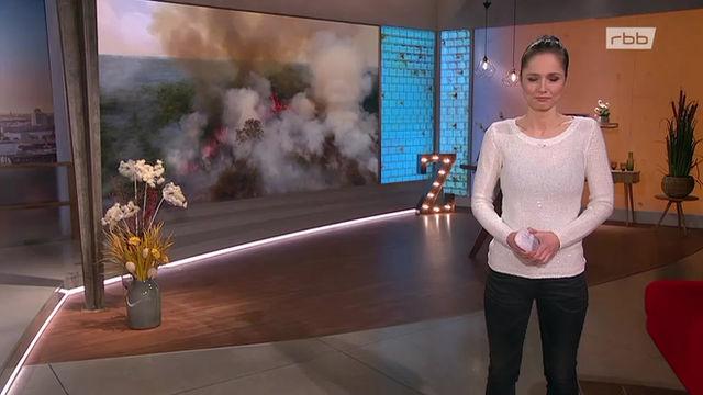DRYAD TV Coverage (English)