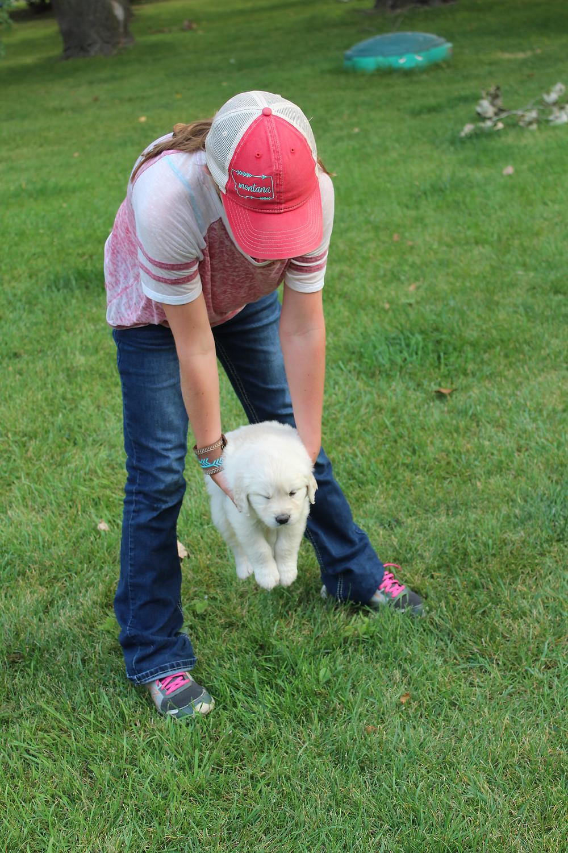 English Cream Golden Retriever Puppy Aptitude Testing