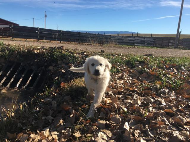 kadie puppy picture