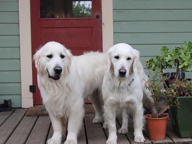 puppy parents Kadie & Hit