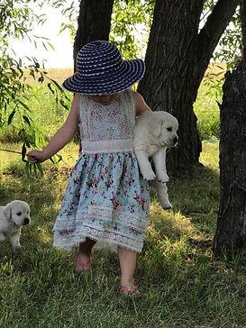 English Cream Golden Retriever Puppies, Girl