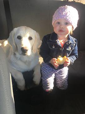 English Cream Golden Retriever family dog