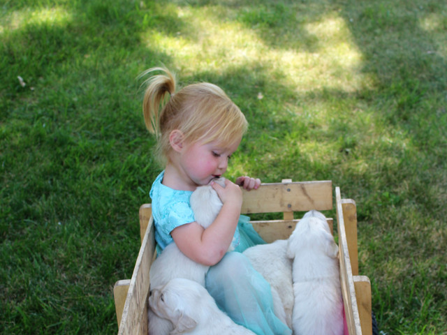 girl & puppies
