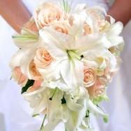 Peach Blush white lilies