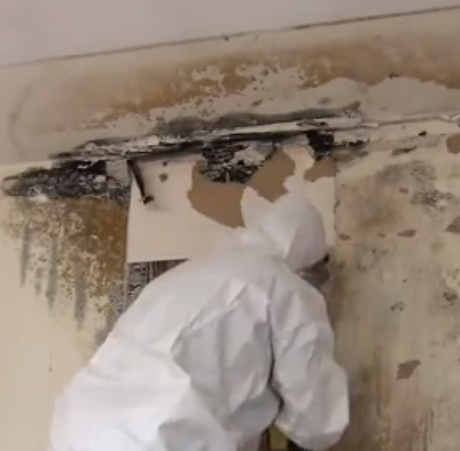 Mold_Remediation.png