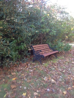 bench autumn_edited.jpeg