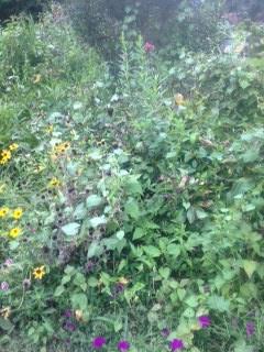 Weeds & Seeds...