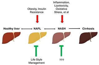 NASH, NAFLD, Cirrhosis, metabolism, Xiaoli Sun lab, Peng Zhao lab