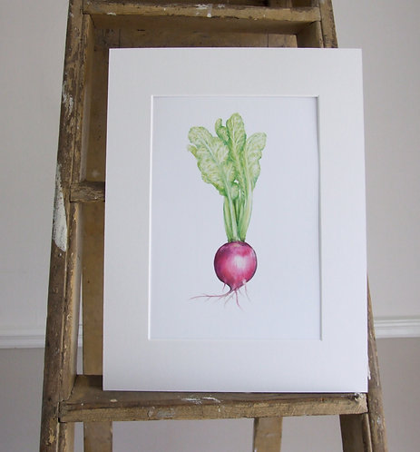 Beetroot - Mounted print - Sml, Collectors Print