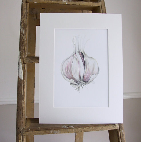 Garlic - Mounted print - Sml, Collectors Print