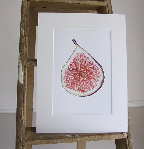 Fig - Mounted print - Med, Collectors Print