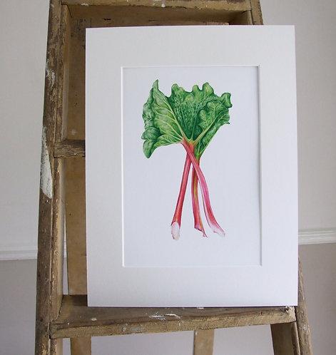 Rhubarb - Mounted print - Med, Collectors Print