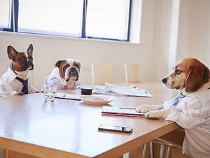 dogs_meeting-800x600.jpeg
