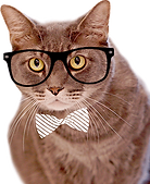 Office-Cat.png