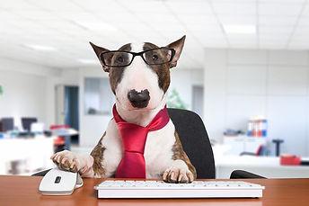 1_Business-dog-at-work.jpg