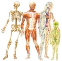 Physiothérapie 1.centre.sos